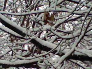 Our backyard features a squirrel's paradise of oak trees.  The snow-lined intertwined branches are visually stimulating.